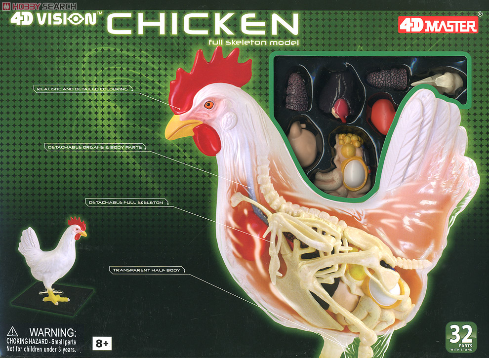 Chickens Anatomy Model (Plastic model) Images List