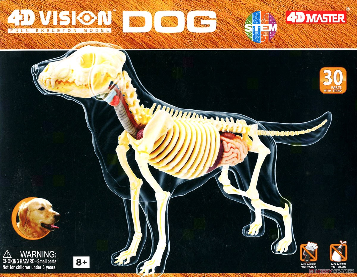 Dog Anatomy Skeleton Model (Plastic model) Images List