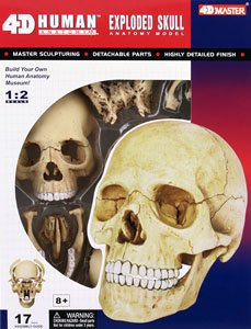 3D Puzzle 4D VISION Dissection of a Human Body No 23 1/2