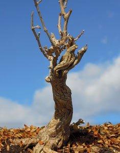 古木の幹 (天然素材)
