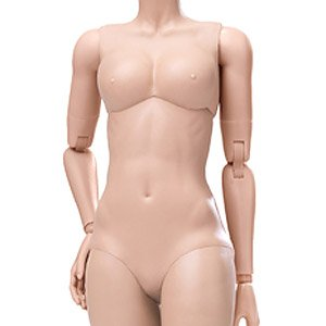 POP Toys 1/6 Shin Series Super Flexible Female Base Model Plastic Joint Suntan Middle Bust (Fashion Doll)