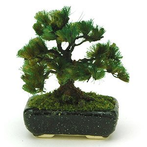 THE BONSAI 1/12 Pine w/Square pod (Black)