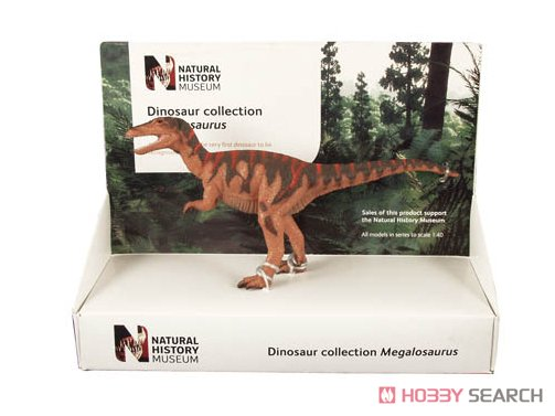 英国自然史博物館 メガロサウルス (16cm) (完成品)