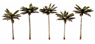TR3597 (N/HO/O) Palm Trees (5pcs.) (Model Train)